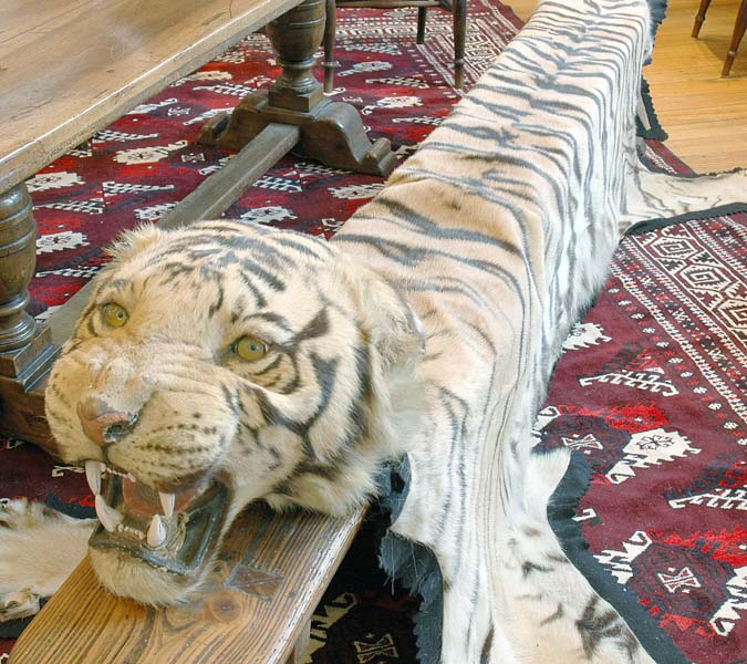 Benghal Tiger Skin Rug With A…