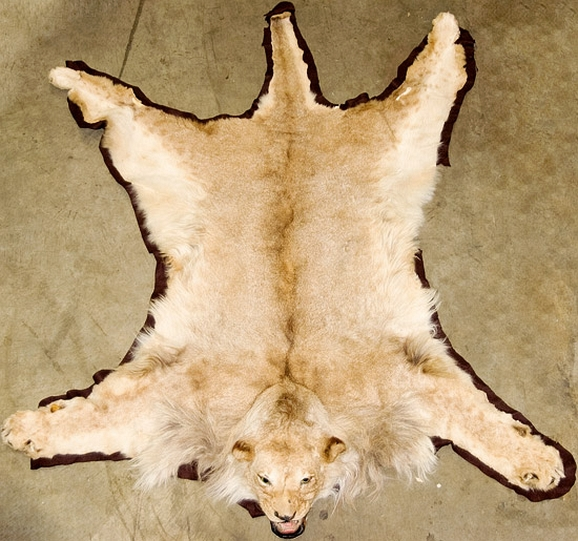 Awesome Lion Skin Rug