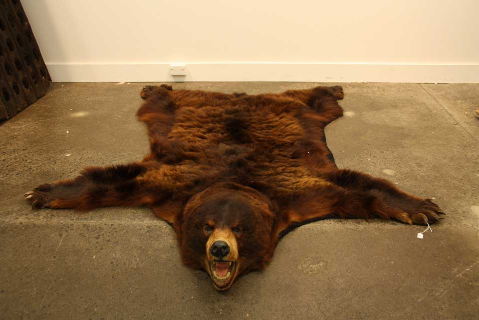 A Brown Bear Skin Rug With Full…